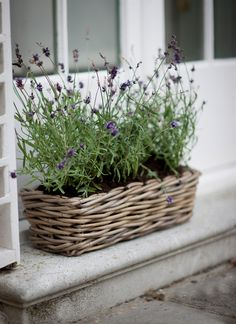 Rattan window planter for growing rosemary, thyme, sage, bay, mint and oregano outside the kitchen and bathroom windows
