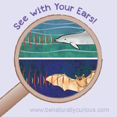 How are dolphins and bats alike? They can both see with their ears! That means they both use sound waves to navigate and find food. See With Your Ears! Dolphin and Bat Echolocation introduces children to the fascinating process of echolocation and the special anatomical features dolphins and bats have to accomplish it. Does your …