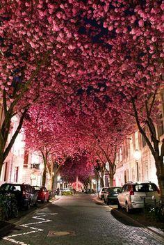 Pink trees love calmness romance eternal happiness