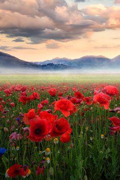 "mybelobru: ""Field of Poppies."""