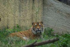 ZOO Kavečany Day Trips, Animals, Animales, Animaux, Animal Memes, Animal, Animais, Dieren