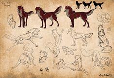 Swift Studies by KayFedewa on DeviantArt Animal Sketches, Animal Drawings, Art Drawings, Awesome Drawings, Wolf Poses, Story Drawing, Drawing Stuff, Werewolf Art, Animation Tutorial