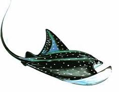 stingray art - Google Search