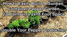 Growing Peppers, Container Gardening, Small Spaces, Herbs, Stuffed Peppers, Boxer Puppies, Youtube, Plants, Harvest