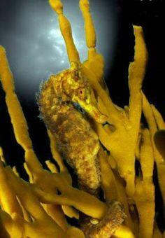 Jennifer Coral Aquarium, Underwater Creatures, Underwater Photos, Marine Life, Photo Contest, Blue, Animals, Seahorses, Pageant Photography