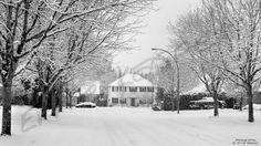 ~Urban Winter~  #winter   #langley   #trees   #snow   #photography  by Ernie Kasper