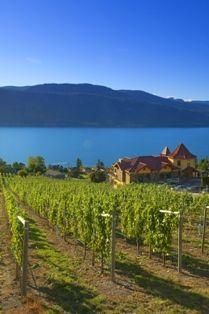 Gray Monk Estate Winery (Kelowna, BC) -- Curated by: Neufeld Jones Wine Vineyards, In Vino Veritas, Italian Wine, Beach Hotels, Canada Travel, British Columbia, Columbia Road, Wine Country, Vacation Trips
