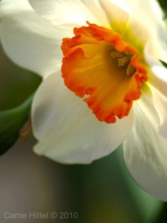 """https://flic.kr/p/7SARu8 