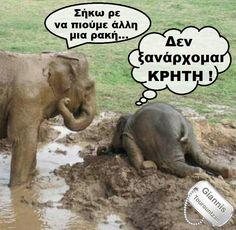 Murphy Law, Elephant, Animals, Animales, Animaux, Elephants, Animal, Animais