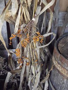 Bittersweet & Corn Stalk