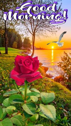 Good Morning Nature, Good Morning Post, Good Morning Wishes, Photos Of Good Night, Mornings, Blessed, Sunday, Flower, Good Day Quotes