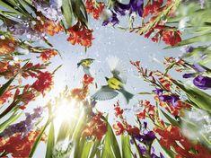 kaercher garden campaign on Behance