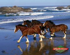 Pferde                                                                                                                                                      Mehr