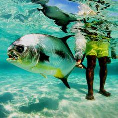 permit fishing