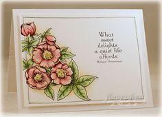 Lenten Rose set