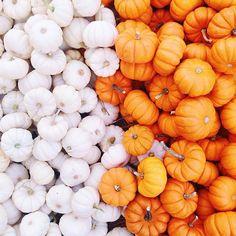 Mini pumpkins! //pinterest//tbhjessica ☼ ☾♡