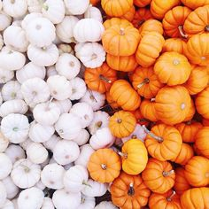 Mini pumpkins! //pinterest//tbhjessica ☼ ☾♡