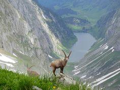 Switzerland - Altmann Appenzell