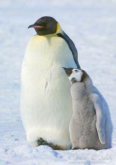 ❤レo√乇 ღ...❥.•:*¨♥¨*:•We loved with a love that was more than love..•:*¨♥¨*:•   -  -Edgar Allan Poe-