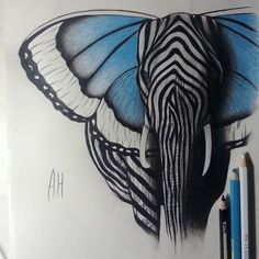 Drawing by @Maureen Mills Mills Mitchell Ali Ashour Hermez Elephant   Butterfly   Zebra  | followpics.co