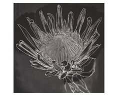 Black Protea Wall Art - Homeware | Weylandts South Africa