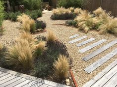 Stipa & Lavender beds to complement this arid theme Lavender Bedding, Stipa, Bespoke Design, Planting, Stepping Stones, Garden Design, Landscape, Outdoor Decor, Flowers