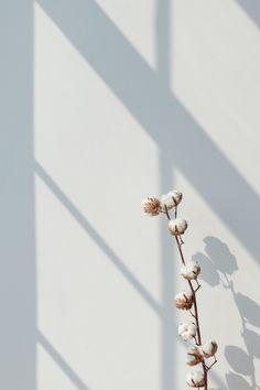 Iphone Wallpaper Minimal, Blue Wallpaper Phone, Gold Wallpaper Background, Wallpaper Nature Flowers, Plant Wallpaper, Minimalist Wallpaper, Colorful Wallpaper, Aesthetic Iphone Wallpaper, Wallpaper Backgrounds