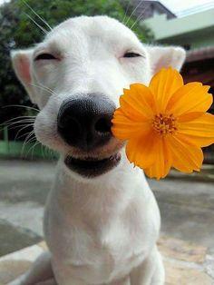 https://ilovepuppieseverywhere.wordpress.com/the-three-marbles-dog-bed/ #dogandflowers