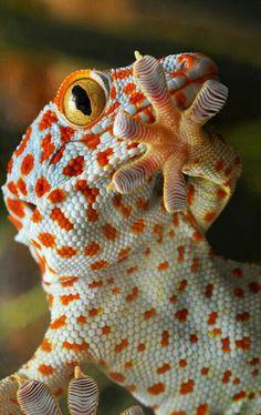 #lizard ~ETS