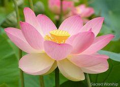art of living - vipassana meditation  #artofliving