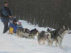 Workaway in . Help with huskies near Vienna. Vienna, Husky, Dogs, Animals, Austria, Garden, Travel, Inspiration, Vacation