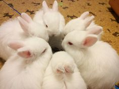 Things that make you go AWW! Like puppies, bunnies, babies, and so on. A place for really cute pictures and videos! Hamsters, Animals And Pets, Baby Animals, Funny Animals, Cute Animals, K Pop, Bts Memes, Somebunny Loves You, Cute Bunny