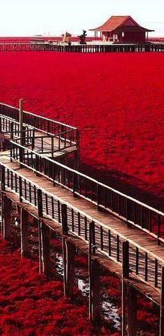 Red Beach in Panjim, China - La Playa roja de panjin es un lugar ubicado en las marismas del delta del río Liao en Panjin (China). Esta reserva natural es un hábitat clave para las aves