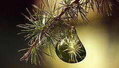 Al die soorten kerstbomen, wat een keus! - FemNa40