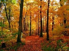 beauty in autumn sanrodz