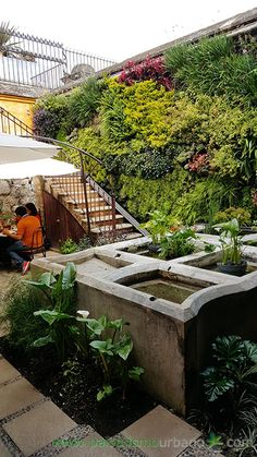 Jardín vertical realizado en Guatemala por Paisajismo Urbano y su franquicia local By Botanik: 5 meses después