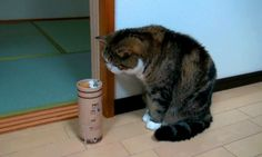Everyday College Emotions, as Told by Cat GIFs | The Odyssey