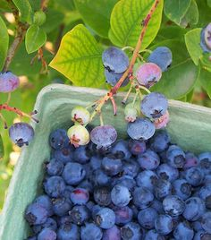 'Eat more flavonoid-rich fruits and veg to prevent weight gain' Weight Loss Plans, Best Weight Loss, Weight Gain, Weight Loss Tips, Weight Loss Smoothies, Healthy Smoothies, Reduce Body Fat, Kili, Fruit And Veg