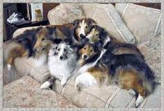 Come on Mom! We saved you room on the couch!