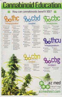Molecole contenute nella Cannabis e loro effetti