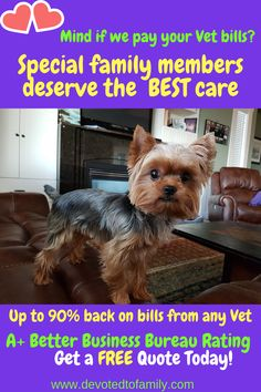 Pet Insurance for our loved family furry friends. Our pets deserve the best care and coverage in case of illness or injury that we can get for them. Protect your loved pets . Up to of your vet bills covered. Better Business Bureau, Pet Insurance, Free Quotes, Work From Home Moms, Young Living Essential Oils, Good Things, Pets, Friends, Amigos
