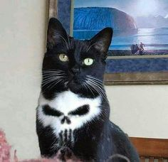 We named him Frank - Cats - Katzen Funny Animal Memes, Cute Funny Animals, Funny Animal Pictures, Cute Baby Animals, Cat Memes, Animals And Pets, Funny Humor, Cute Baby Cats, Animal Babies