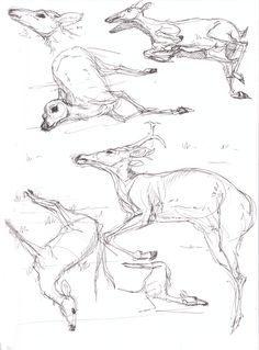 Dead Deer by Paso on DeviantArt Deer Drawing, Ap Drawing, Animal Sketches, Animal Drawings, Deer Art, Moose Art, Deer Sketch, Deer Illustration, Deer Tattoo