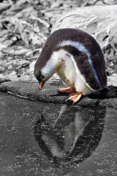 Arctic or Antarctica? How to Choose your Polar Expedition http://theplanetd.com/arctic-or-antarctica-how-to-choose-your-polar-expedition/?utm_content=buffer24029&utm_medium=social&utm_source=pinterest.com&utm_campaign=buffer