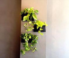 Plantas pared