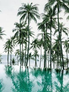 Infinity pool, palm trees