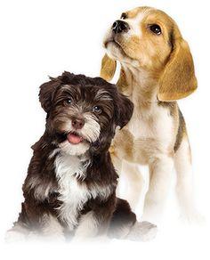Los perros son omnívoros o carnívoros