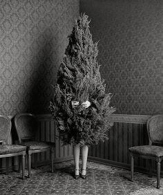 Mmmm you are a tree?