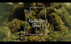 Marijuana Documentary - Northwest Trees (2016) - Weed on steroids