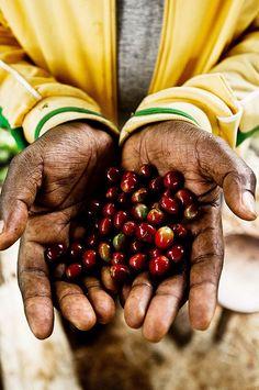 coffee beans, Ethiopia proskitchensupply.com #CoffeeBeans
